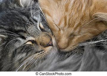 Kuschelnde Kätzchen.