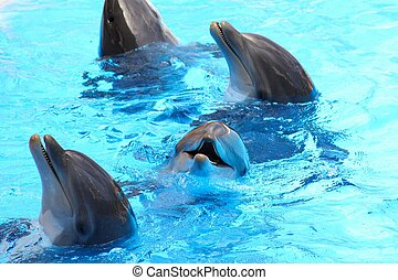 Lächelnde Delfine