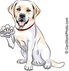 lächelt, labrador, pfote, hund, heiter, vektor, apportierhund, gibt