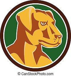 Labrador Golden Retriever Dog Kopf Kreis Retro.