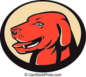 Labrador Golden Retriever Hundekopf.