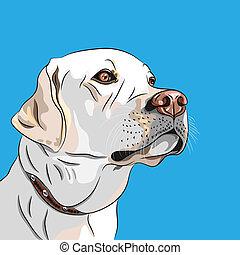 labrador, rasse, hund, vektor, weißes, apportierhund