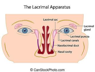 lacrimal, eps10, apparat