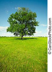 Landscape - Feld mit Eiche
