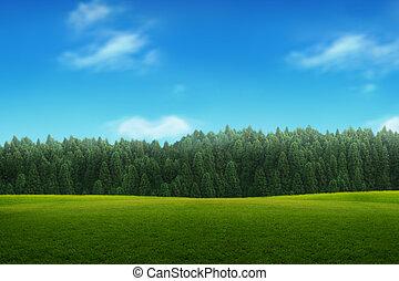 Landschaft des jungen grünen Waldes mit blauem Himmel