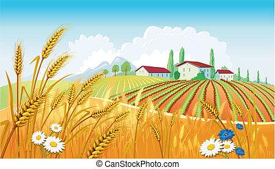 Landschaft mit Feldern.