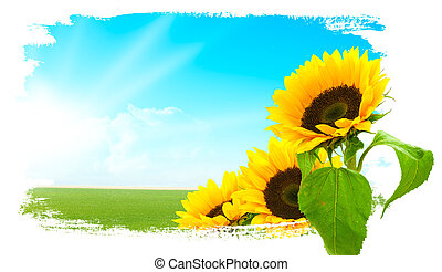Landschaft - Sonnenblumen, grünes Land, blauer Himmel