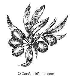 Landwirtschaftlicher Olivenbaum Zweig monochrome Vektor