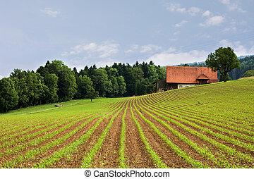 Landwirtschaftsfelder