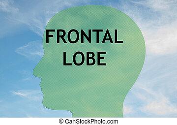 lappen, frontal, begriff