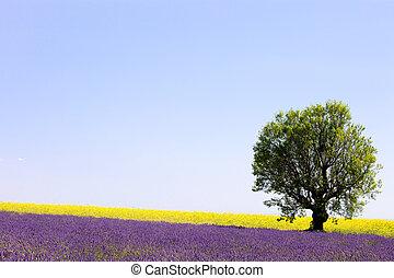 Lavendel und gelbe Blumen, blühendes Feld und ein einsamer Baum. Valensole, Pronce, france, europe.