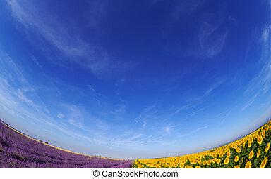 Lavendel und Sonnenblumen unter blauem Himmel