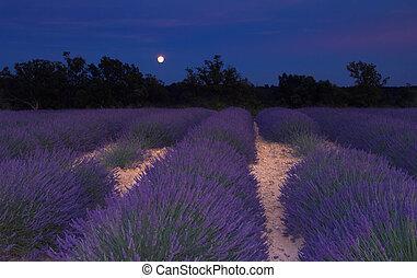 Lavendelfeld in der Provence unter Mondlicht
