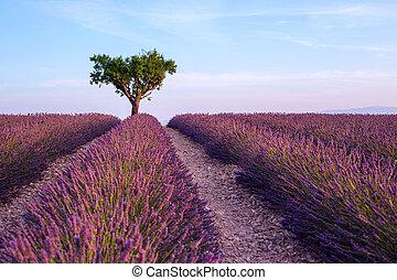 Lavender Feld Sommersonne Landschaft mit einem Baum in der Nähe von Valensole