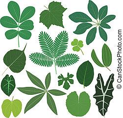 Leaf verlässt tropische Pflanzen