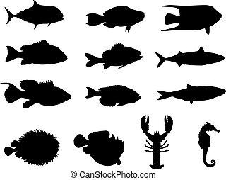 leben, silhouetten, meer, fische
