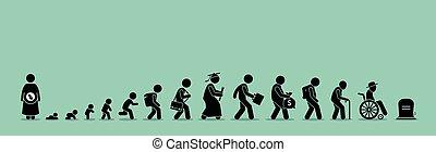 Lebenszyklus und Alterungsprozess.
