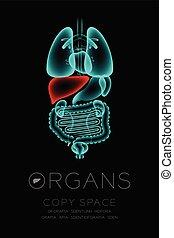 leber, begriff, organ, glühen, raum, farbe, text, mann, idee, abbildung, freigestellt, dunkel, satz, hintergrund, infektion, röntgenaufnahme, kopie, organe, rotes , ikone