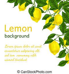 Lemon Hintergrundplakate.