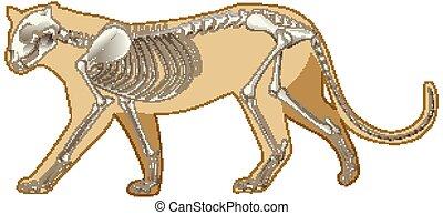 leopard, skelett, hintergrund, weißes, grobdarstellung