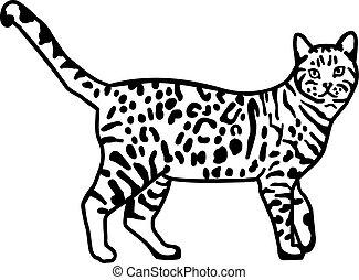 Leopardenblutkatze.