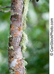 Lichen auf einem Baumstamm.