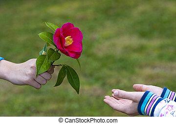 liebe, geben, symbol, hände, blumen, freundschaft, kinder
