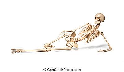 liegen, weibliche , floor., skelett, menschliche