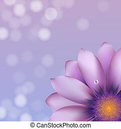 Lilac gerber mit Borkeh