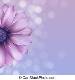 Lilac Gerber mit Wassertropfen