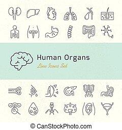 linear, menschliche , organe, signatures., heiligenbilder, groß, satz, vektor