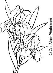 linie, botanik, hand, zeichnung, leaves., blumen, coloring., outline., drawing., iris, illustration.