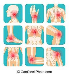 localization, skelett, satz, schmerz, koerper, gelenke, menschliche , knochen, kreis, rotes