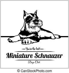 logo, vektor, hund, schnauzer, schablone, miniatur, -, t-shirt, abzeichen, abbildung