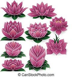 Lotus hat die Farbe von 3