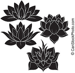 Lotus zwei