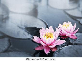 Lotusblüten.