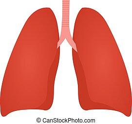Lung Anatomie bunte Zeichnung auf einem weißen Hintergrund.