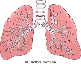 lunge, abbildung, menschliche