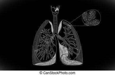lunge, menschliche , struktur