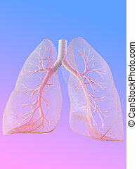lunge, menschliche