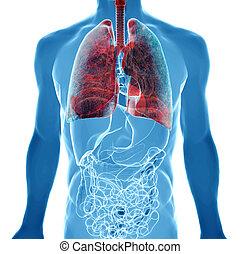 Lungenkrebs im Röntgenblick.