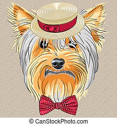 lustiges, hund, yorkshire, vektor, hüfthose, terrier, karikatur
