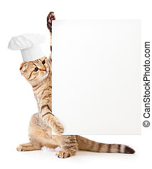Lustiges Kätzchen mit Kochmütze mit leerem Menü