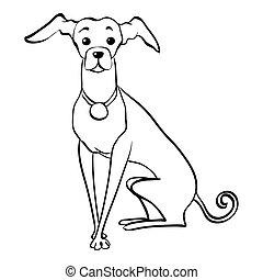 lustiges, skizze, sitzen, windhund, hund, vektor, italienesche