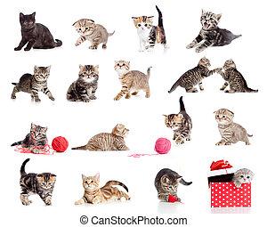 lustiges, wenig, babykatzen, collection., freigestellt, katzen, white., bezaubernd