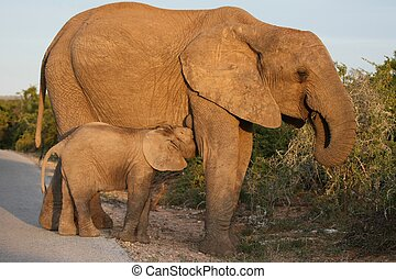 Lutschender Baby-Elefant