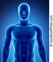 Männliche Figur in anatomischer Position