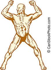 Männliche menschliche Anatomie Körperbauer Flexing Muskeln.