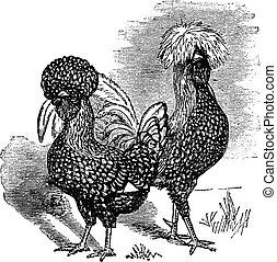 Männliche und weibliche polnische (Hühner) Vintagegravur